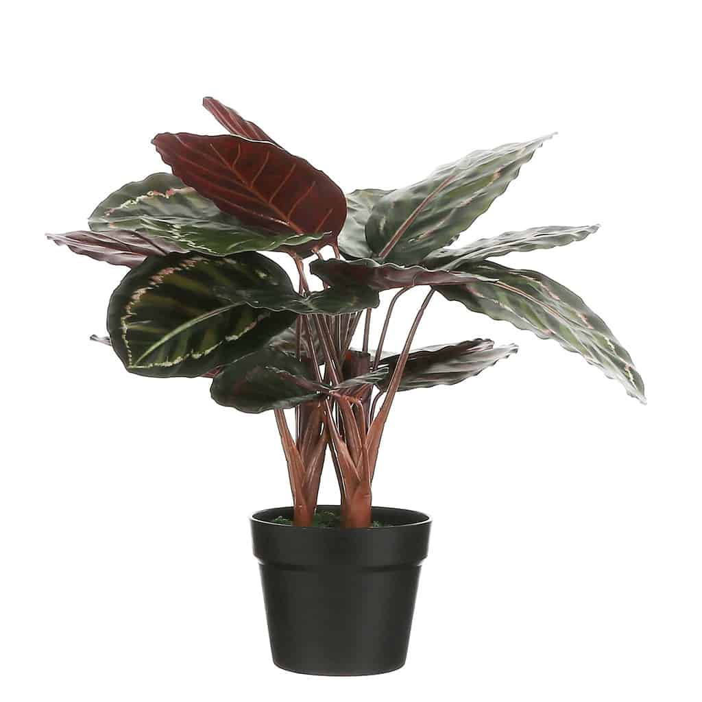 Kunstplant Calathea roseopicta 60 cm