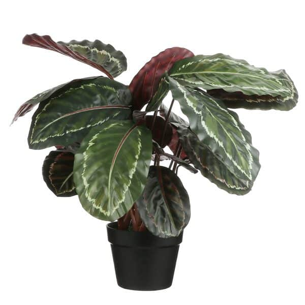Kunstplant Calathea 70 cm