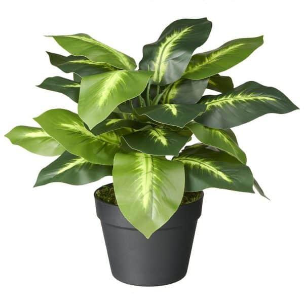 Kunstplant Dieffenbachia 50 cm