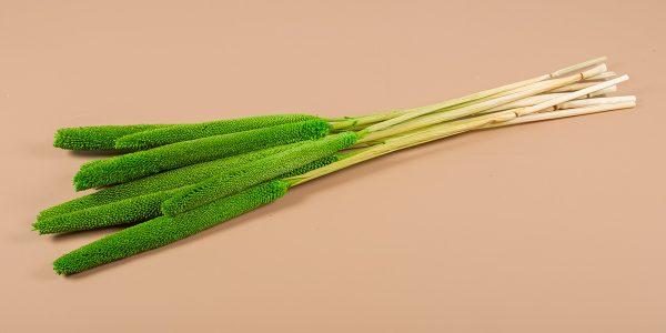 droogbloemen Babala groen