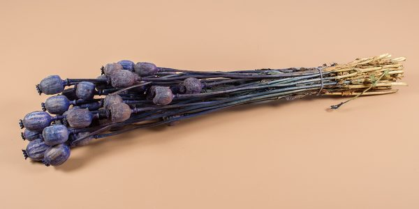 droogbloemen Papaver blauw