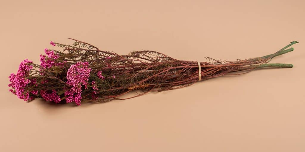droogbloemen Riceflower fuchia