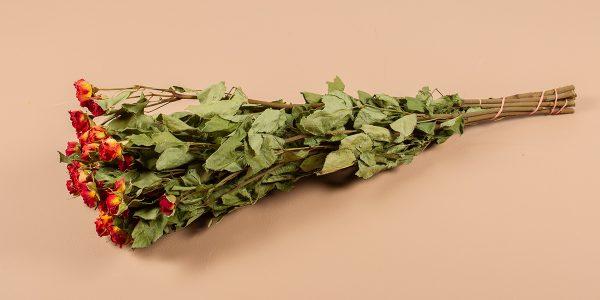 droogbloemen gedroogde roosjes rood