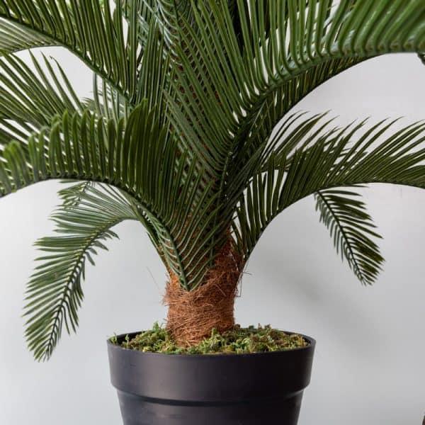 Kunstplant Cycas 50 cm