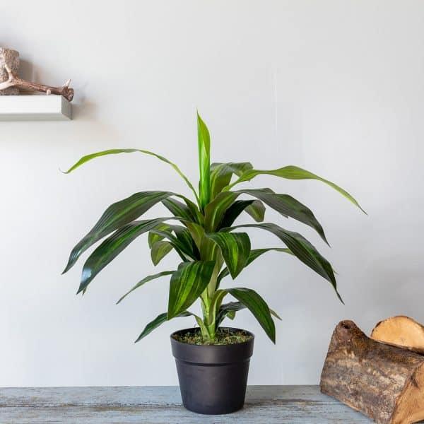 Kunstplant Dracaena fragrans 60 cm