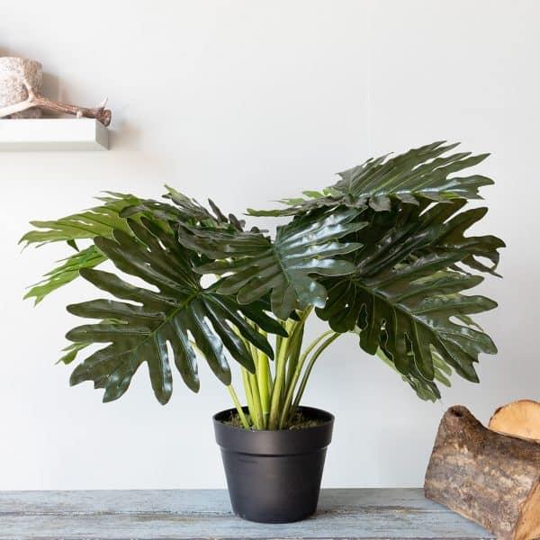 Kunstplant Philo Xanadu 55 cm