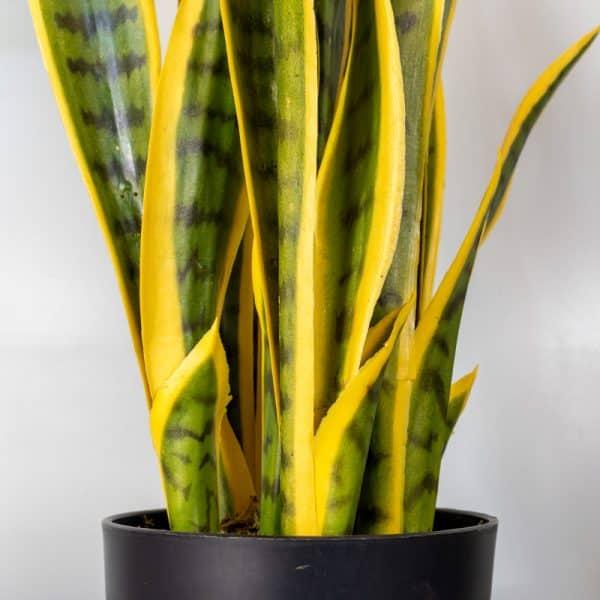 Sansevieria kunstplant 70 cm