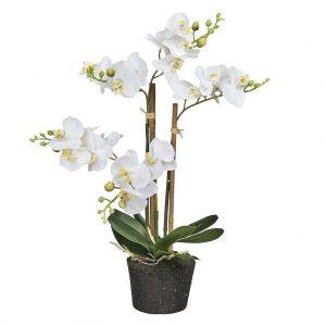 Orchidee 3 tak wit mini