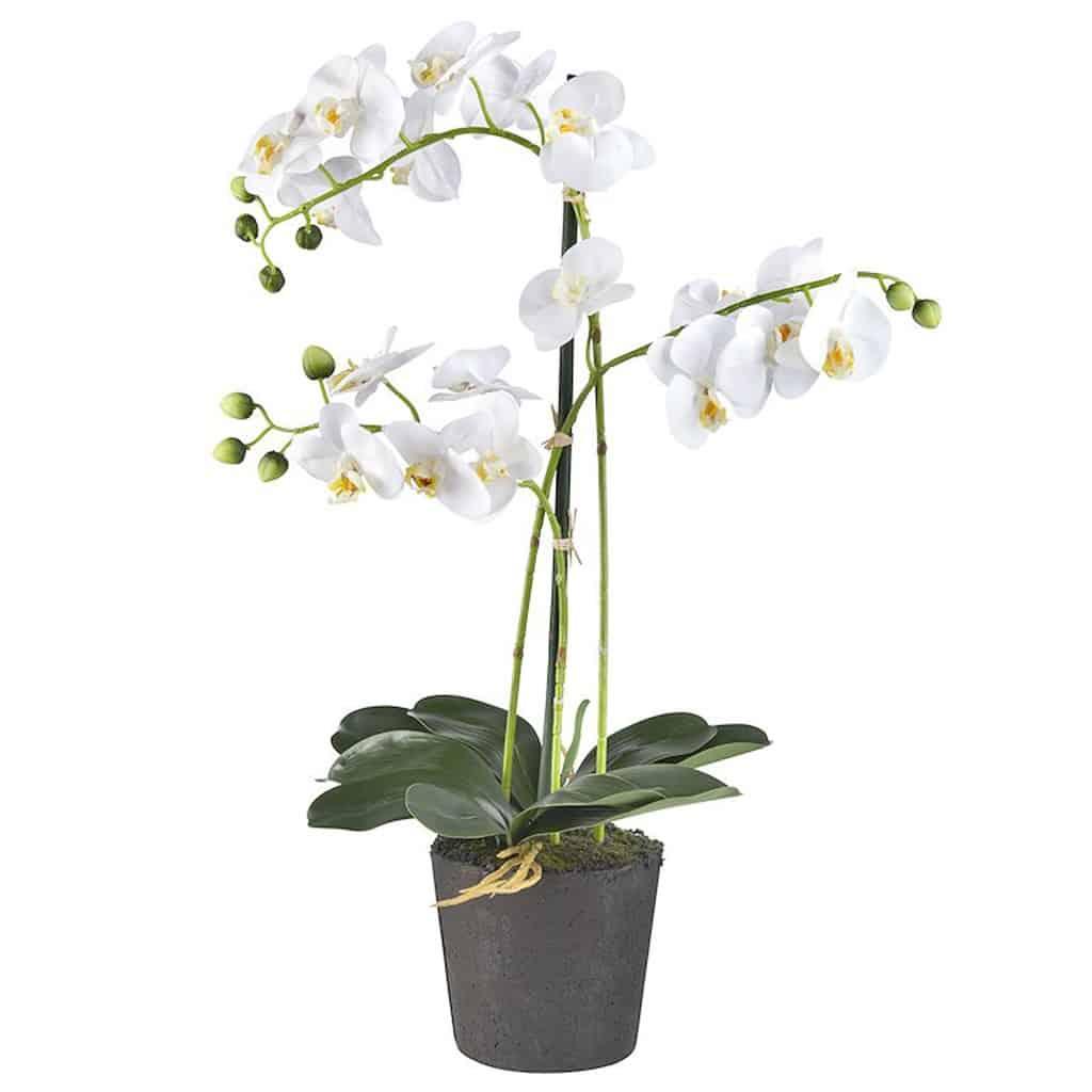 Kunstplant Orchidee 3 tak wit