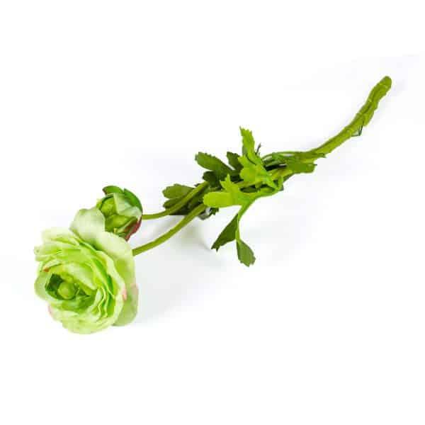 Ranonkel groen