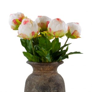 6 pioen rozen dicht creme roze