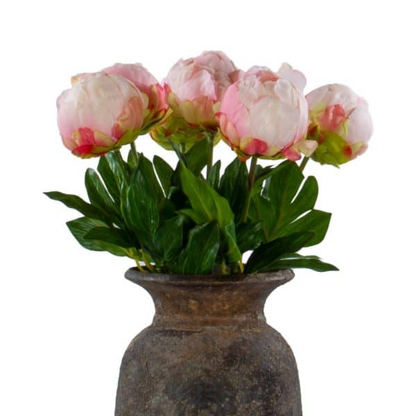 6 pioen rozen dicht lichtroze