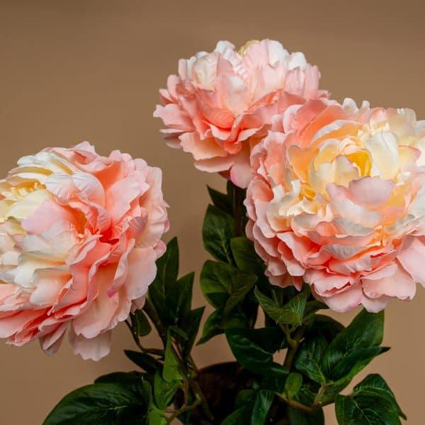 Kunst pioenroos peach