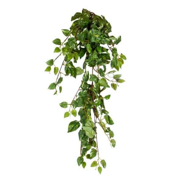 Kunsthangplant Scindapsus