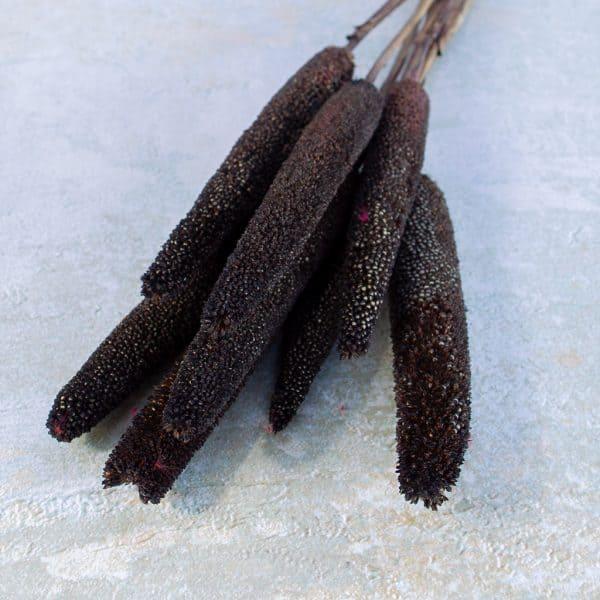 Babala bruin