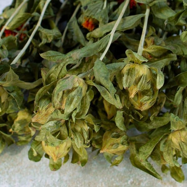Bidens carthamus natural green 2