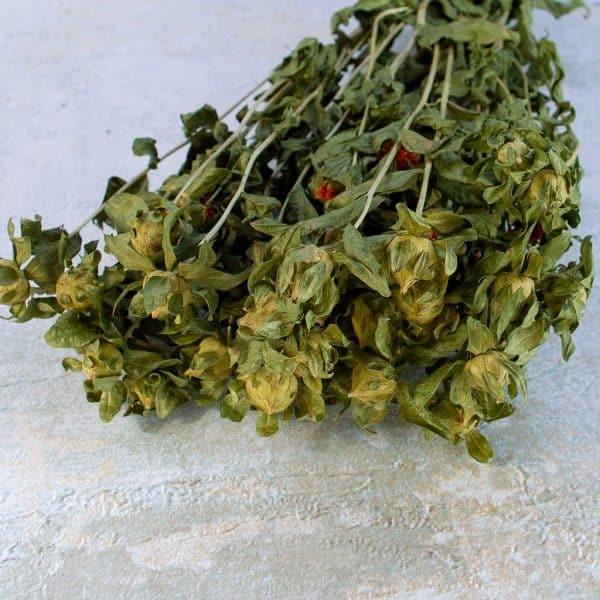 Bidens carthamus natural green