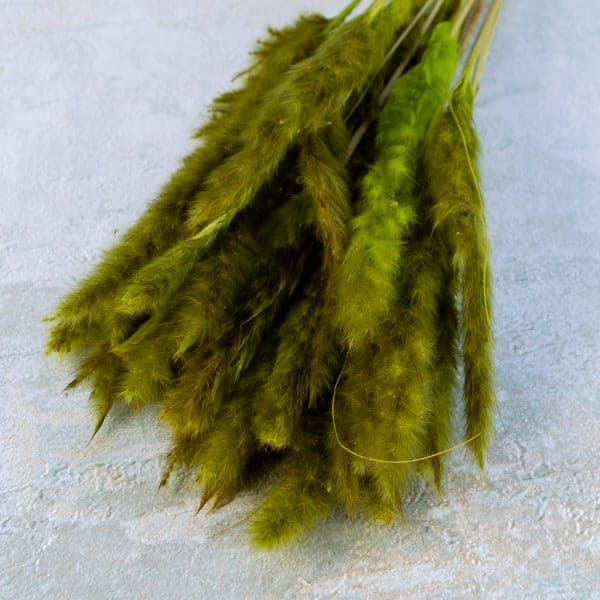 DRY PAMPAS FLUFFY GREEN 2
