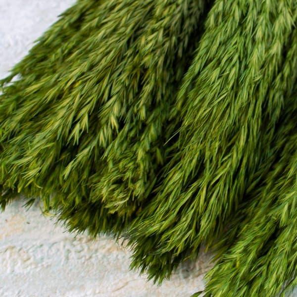 DRY PAMPAS NANAL GREEN 2