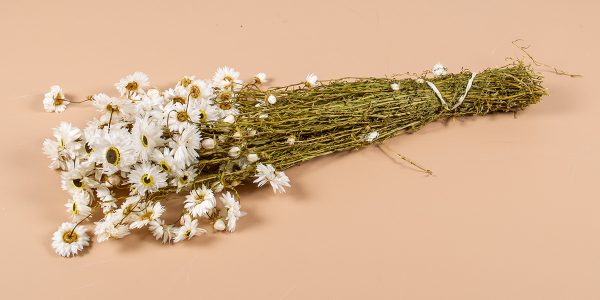droogbloemen Acrolinium Wit