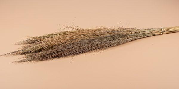 Droogbloemen broom naturel