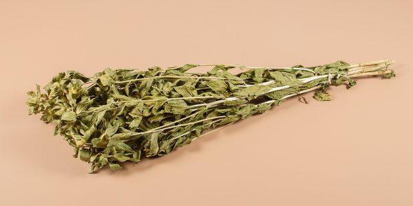Bidens carthamus natural groen
