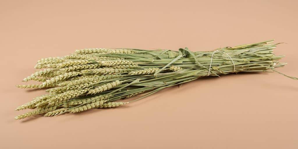 Gedroogd tarwe naturel
