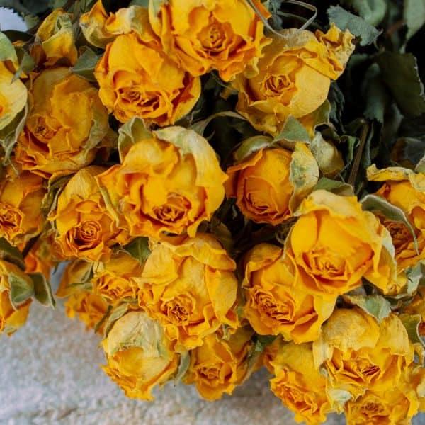 Gedroogde roosjes geel 2