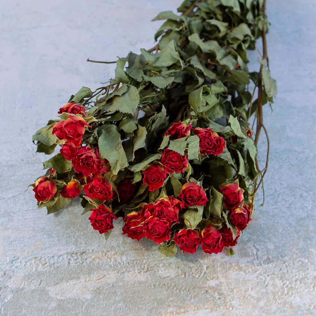Gedroogde roosjes rood