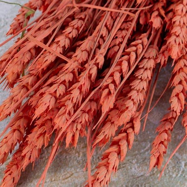 Gedroogde tarwe zalm rood