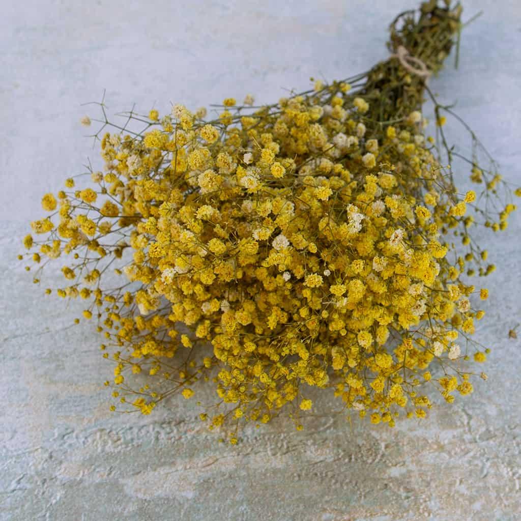 Gyps geel