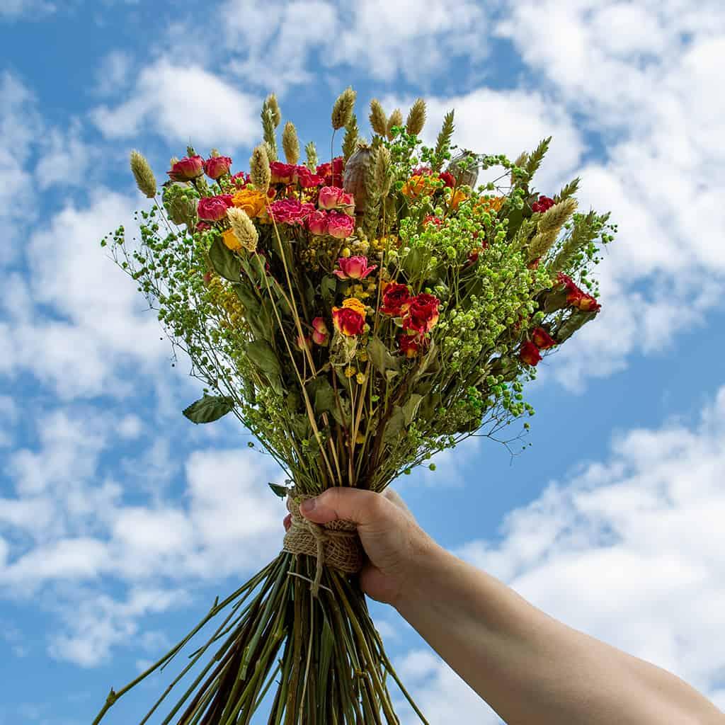 Droogbloemen kopen Roselin Rozenfestival 150 roosjes