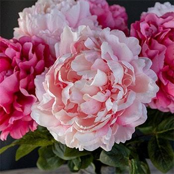 pioenrozen roselin mobiel