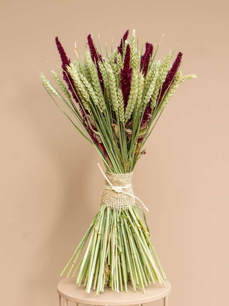 Droogbloemschoofje amaranthus