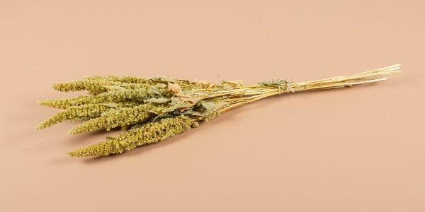 Droogbloemen amaranthuis groen