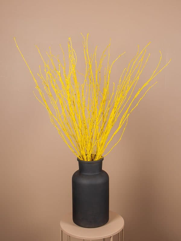 Droogbloemen berkentak 20 geel