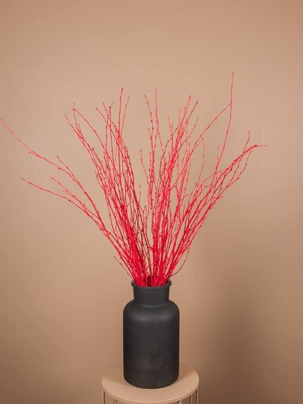 Droogbloemen berkentak 20 rood