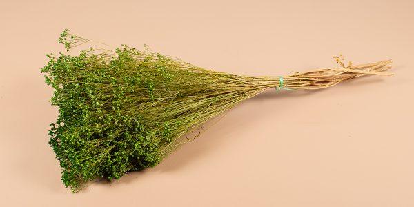 Droogbloemen broom groen