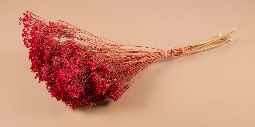 Droogbloemen broom roze