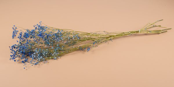 Droogbloemen gyps blauw