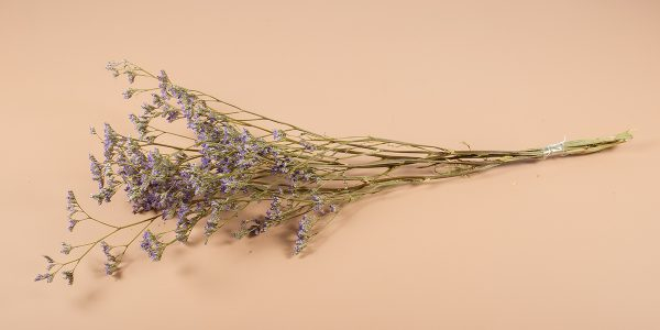 Droogbloemen limonium lila