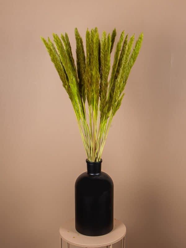Droogbloemen pluimen fluffy groen