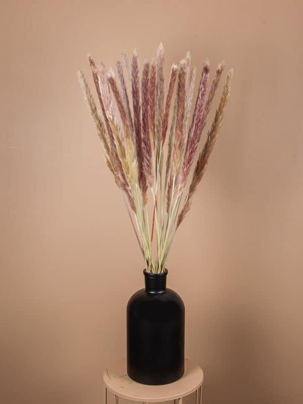 Droogbloemen pluimen fluffy naturel