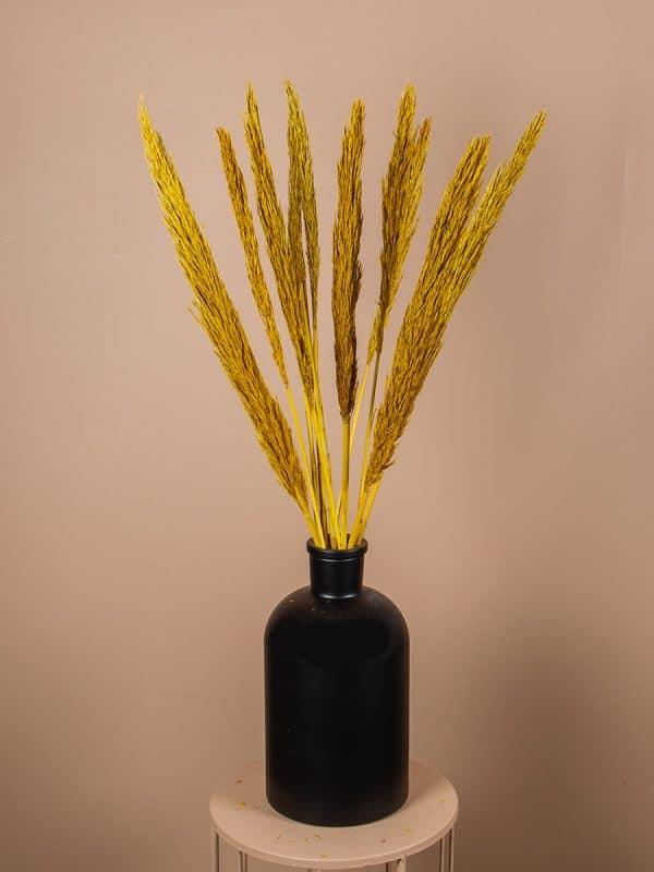 Droogbloemen pluimen nanal geel