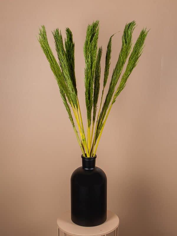 Droogbloemen pluimen nanal groen