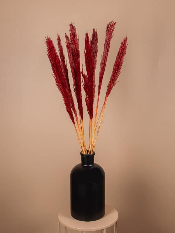 Droogbloemen pluimen nanal rood