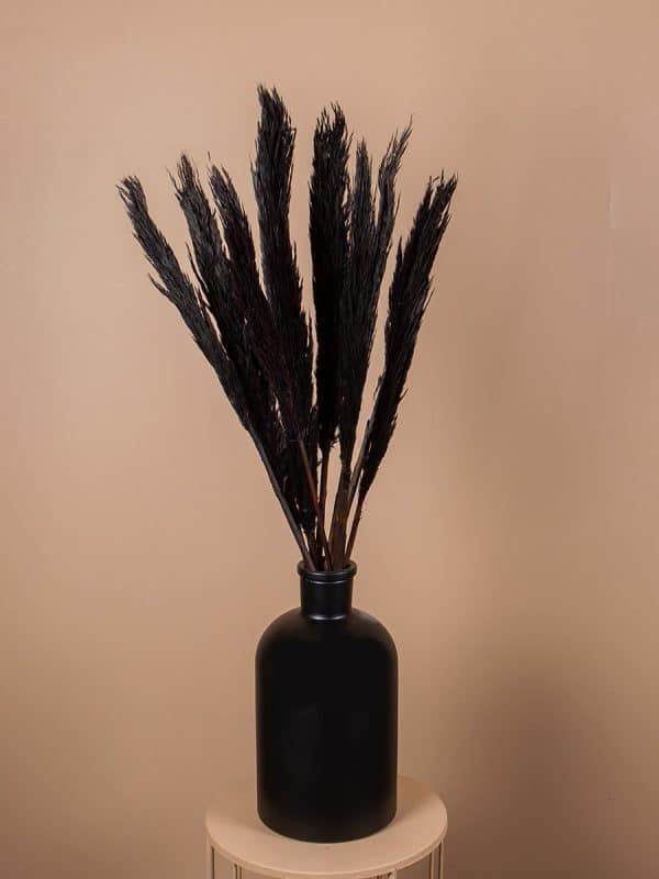 Droogbloemen pluimen nanal zwart