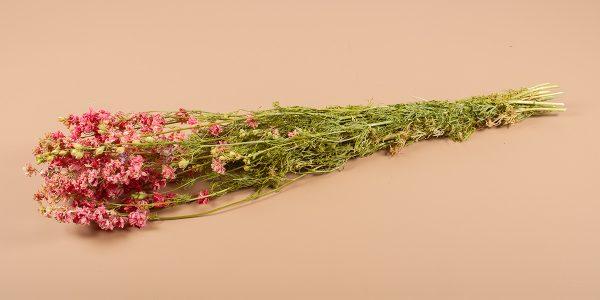 Droogbloemen ridderspoor roze