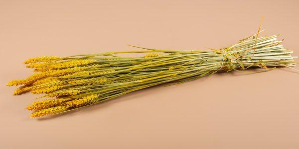 Droogbloemen tarwe geel