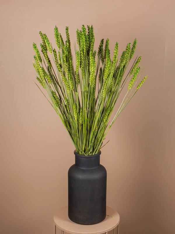 Droogbloemen tarwe vaas groen